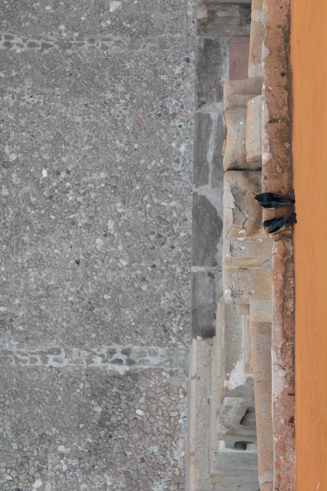 Pájaros del Centro de Artes de Guanajuato